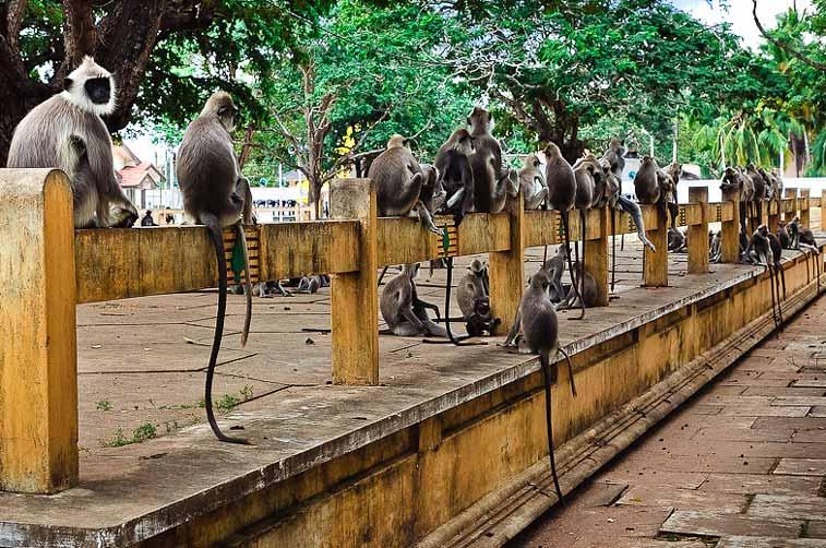 Катарагама, Юг Шри Ланки
