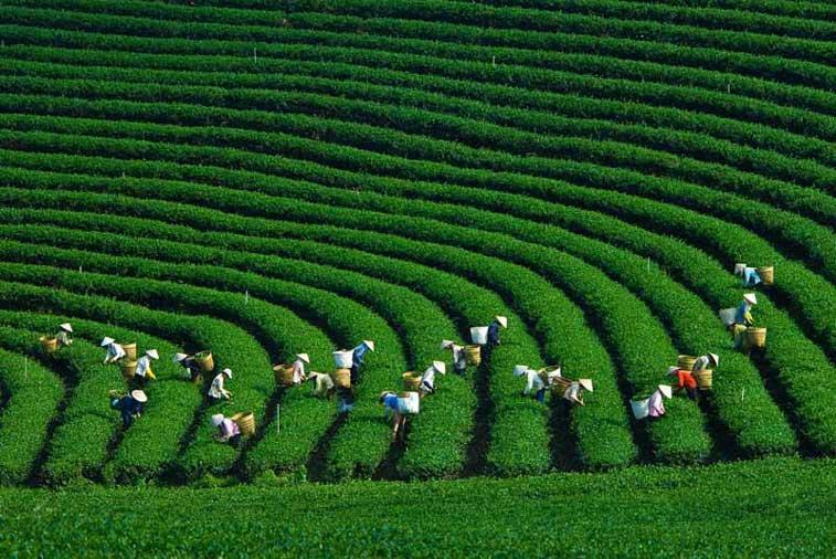 Мок Чау, Северный Вьетнам