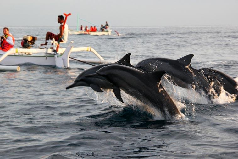 Наблюдение за дельфинами в Ловине