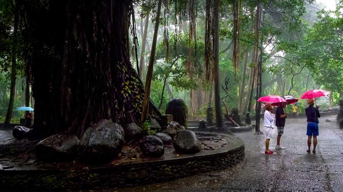 Monkey Forest - царство обезьян