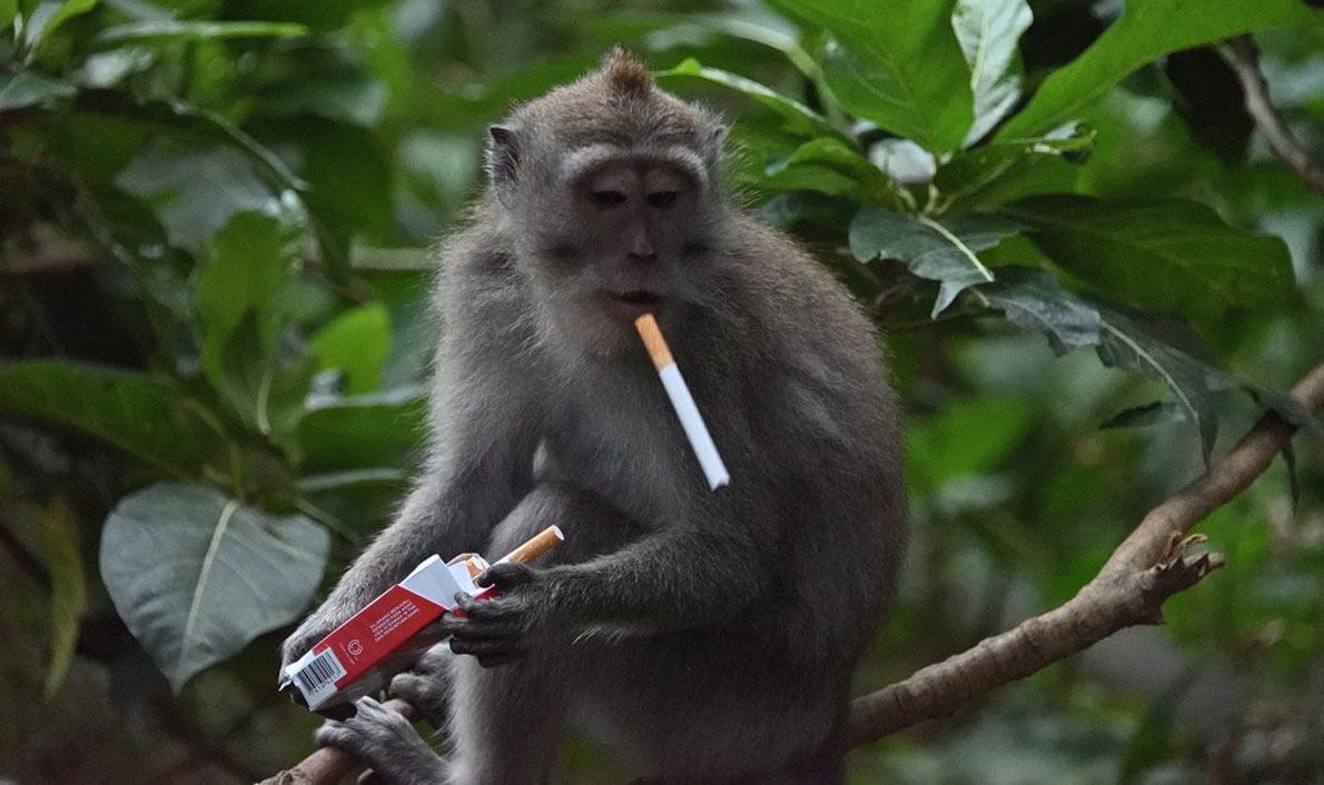 Monkey Forest — царство обезьян