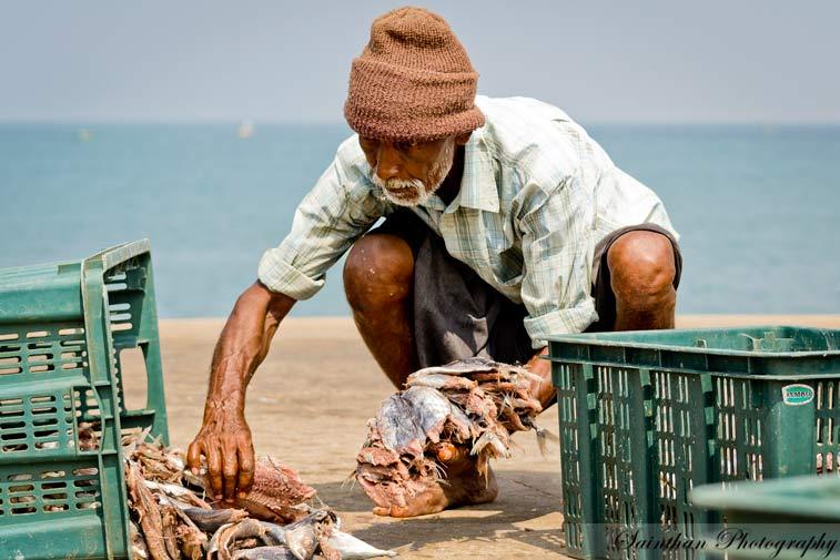 Коломбо и западное побережье Шри Ланки
