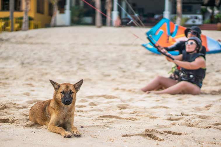 Пляж Муине