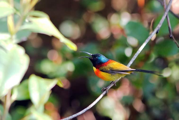 Национальный парк Дой Интханон -самостоятельно