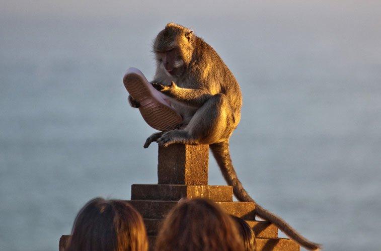 Улувату - храм обезьян - блоги о путешествиях