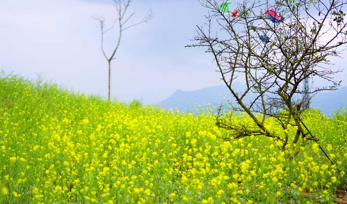 Вьетнам куда поехать в марте - апреле